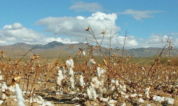 Cotton Farm (Arizona)