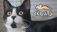 4K CATS: A Weekly Cat Show + Monthly Animal Refuge Tours!