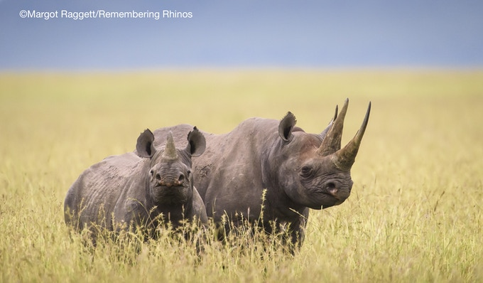 """Future Hope"" print donated by Margot Raggett"