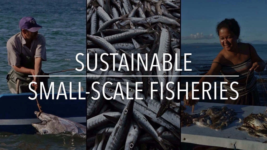 The Future of Sustainable Seafood is from Dock to Dish project video thumbnail