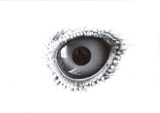 The Eye, ball pen on paper, 59x54cm