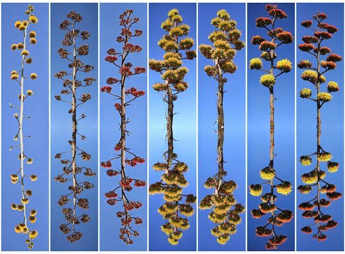 "Wendy Deakins' Photographic art, ""Texas Trees"""