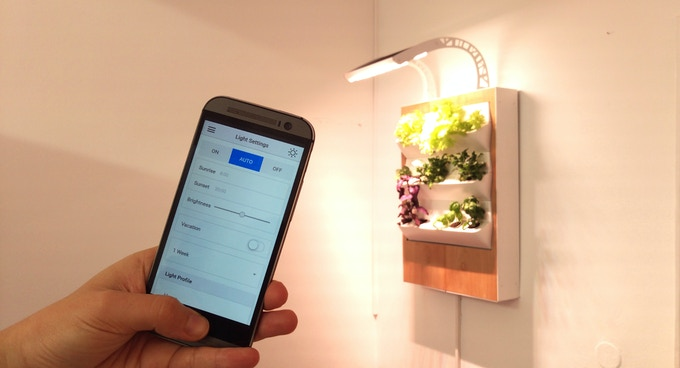 Органическая еда, натуральные продукты: Краудфандинговый проект Herbert предлагает новую технологию выращивания зелени в домашних условиях
