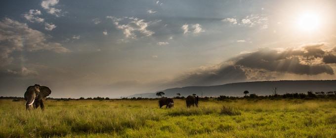 Elephant, Maasai Mara National Reserve, Kenya. © Jon McCormack | Conservation International