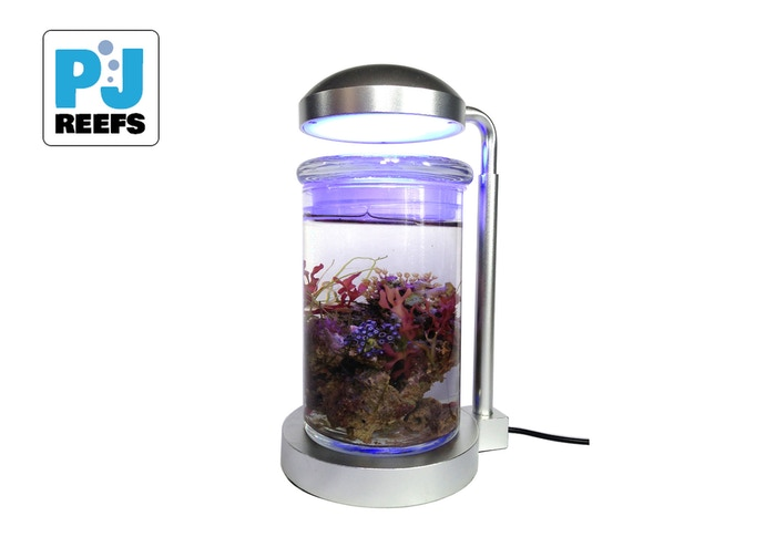 A self contained / low maintenance mini saltwater aquarium.