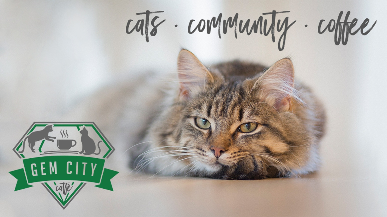 Gem City Catfé is a comfortable coffee house in Dayton, OH, home to adoptable rescue cats, with a community focus.