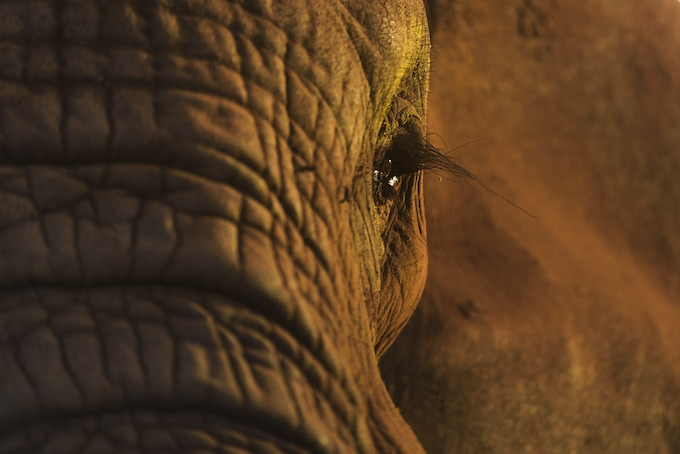 Remembering Elephants print by Margot Raggett