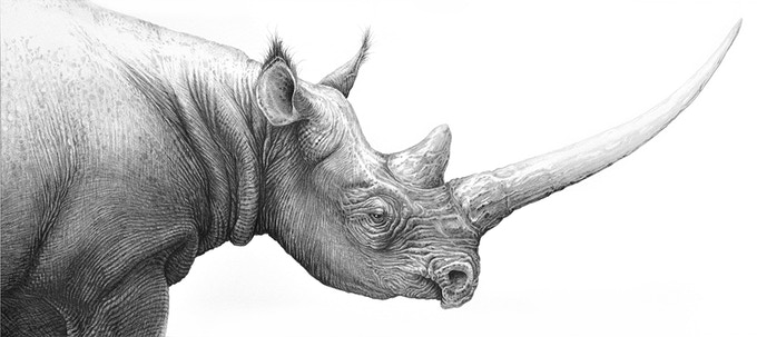 BLACK RHINOCEROS embellished print by Gary Hodges