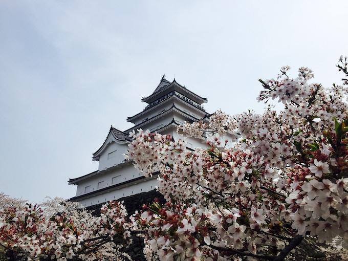 Tsurugajo Castle of Aizu, Fukushima with full Sakura bloom
