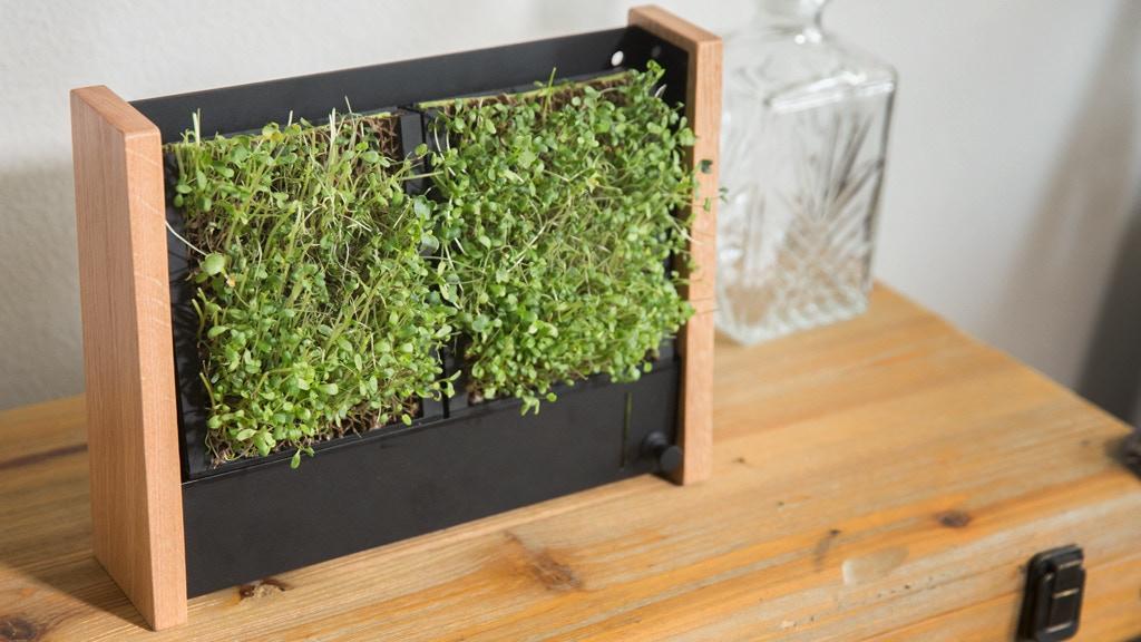 EcoQube Frame: BEST vertical garden for veggies & succulents by Aqua ...