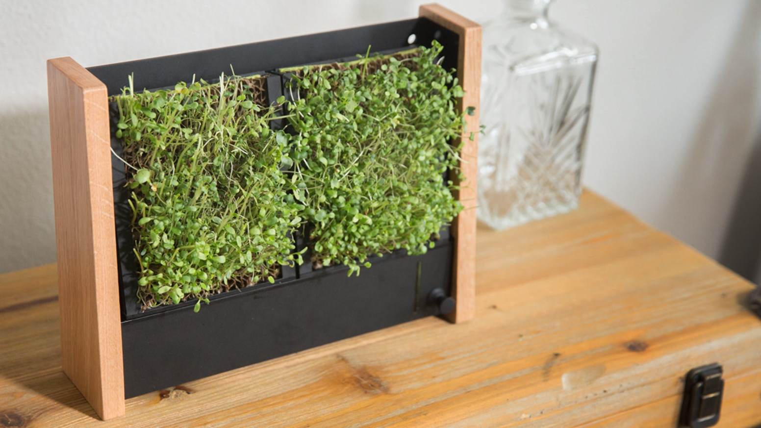 COMPACT Low Maintenance Vertical Garden that grows veggies 10x more NUTRITIOUS or Succulents easily and affordably.