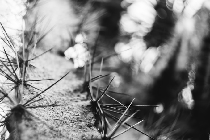 Lens: Trioplan 35+, Photographer: Tamara Skudies