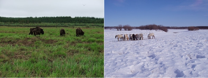 Difference in colour between grasslands and forest in different seasons.