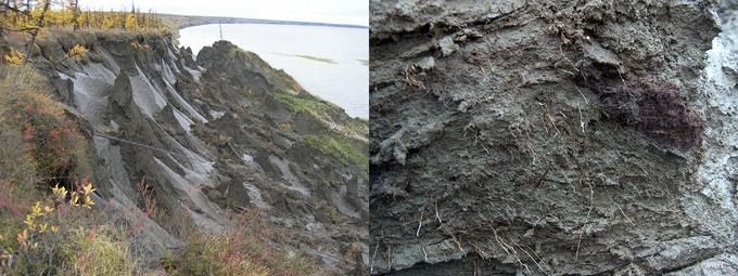 Melting permafrost at Duvanii Yar.  On the right you can see 30,000 year old roots of grass that will decompose and contribute to global warming.