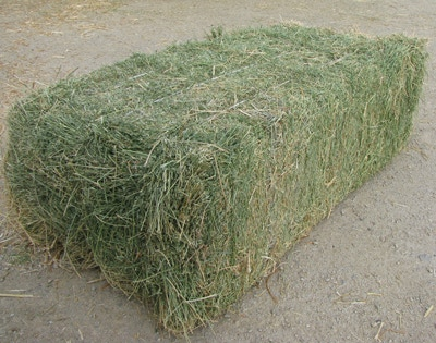Grade A Quality Alfalfa Hay For Animal