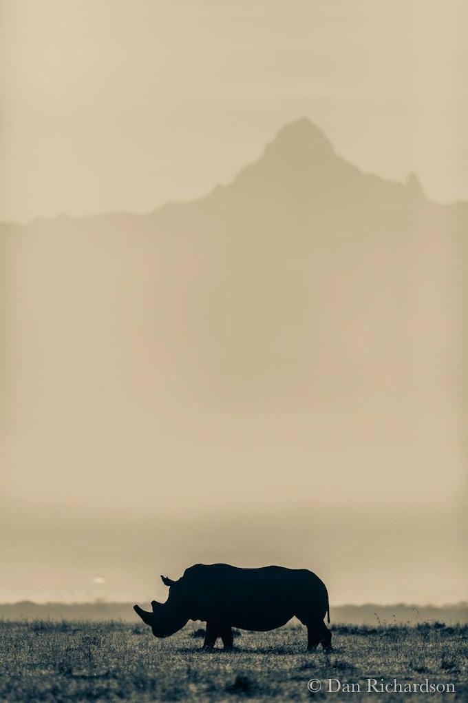 Rhino Silhouette print by Dan Richardson