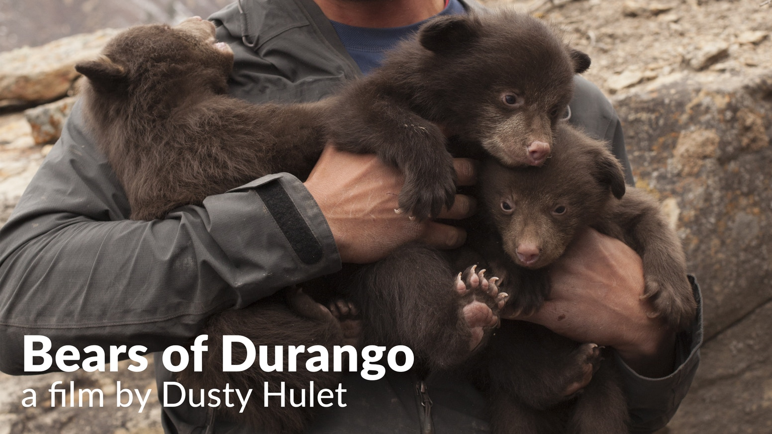 Dive headfirst into bear dens with the biologists studying how human development affects bear behavior. ********************************To make additional contributions, contact: bearsofdurango@gmail.com