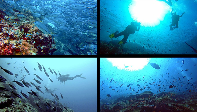 Photos taken by Maxime Tardif and his girlfriend during their own exploration of the coral reefs!