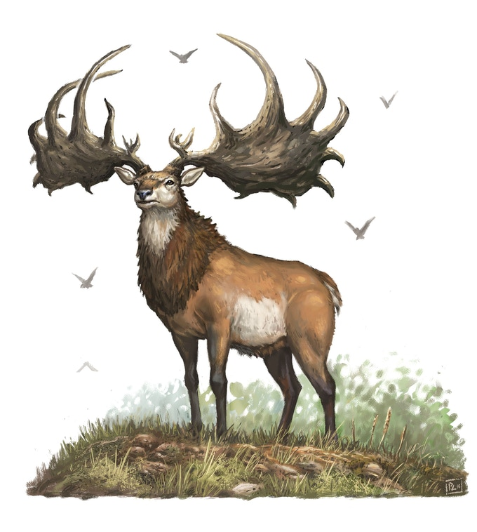 Giant Elk Mount