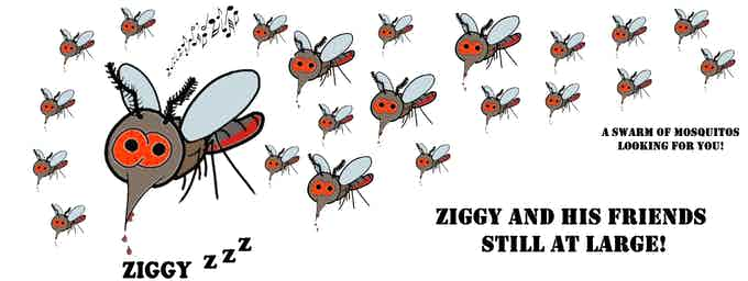 Ziggy and his band still at large!