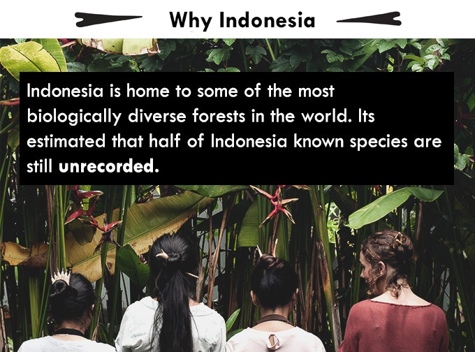 Trees are the lungs of our planet. Adding back to the biodiversity of our rainforests will not only allow our forests, animal species and environment as a whole to thrive.