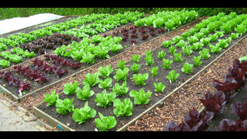 Organic Gardening and Sustainable Living Retreat/School