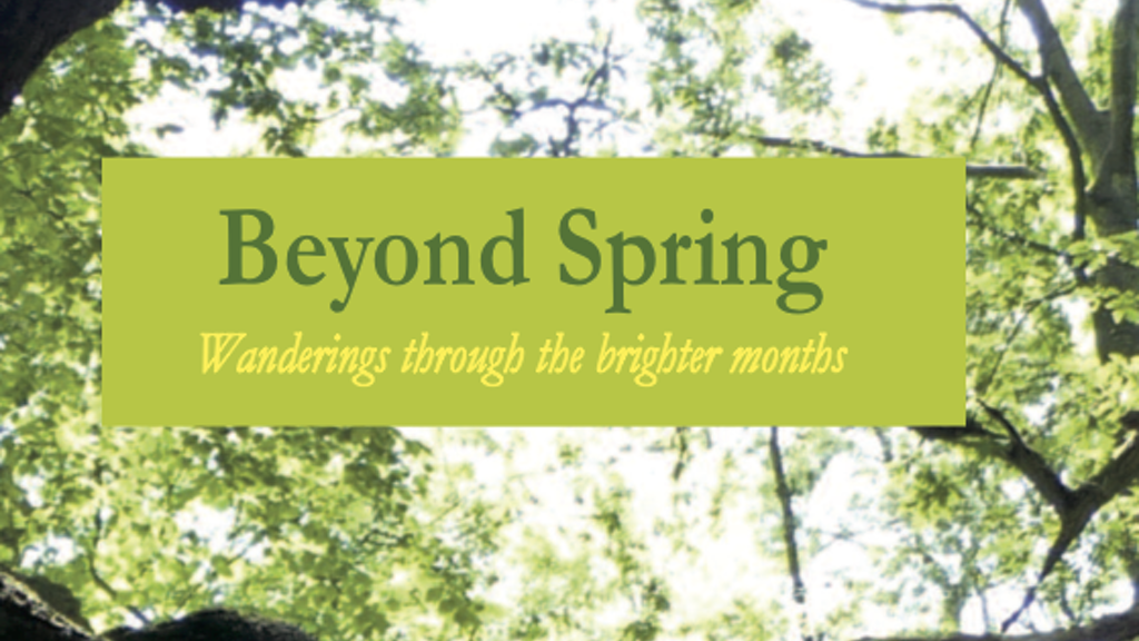 "Matthew Oates' ""Beyond Spring"" Limited Edition Hardback project video thumbnail"