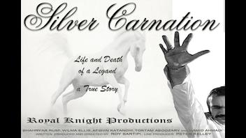 Silver Carnation