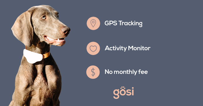 Gosi is a smart GPS device, training tool and health tracker that will change the way you look after your pet.