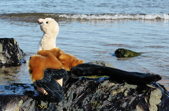 The Finished Archaeopteryx Prototype, Posing on a Beach