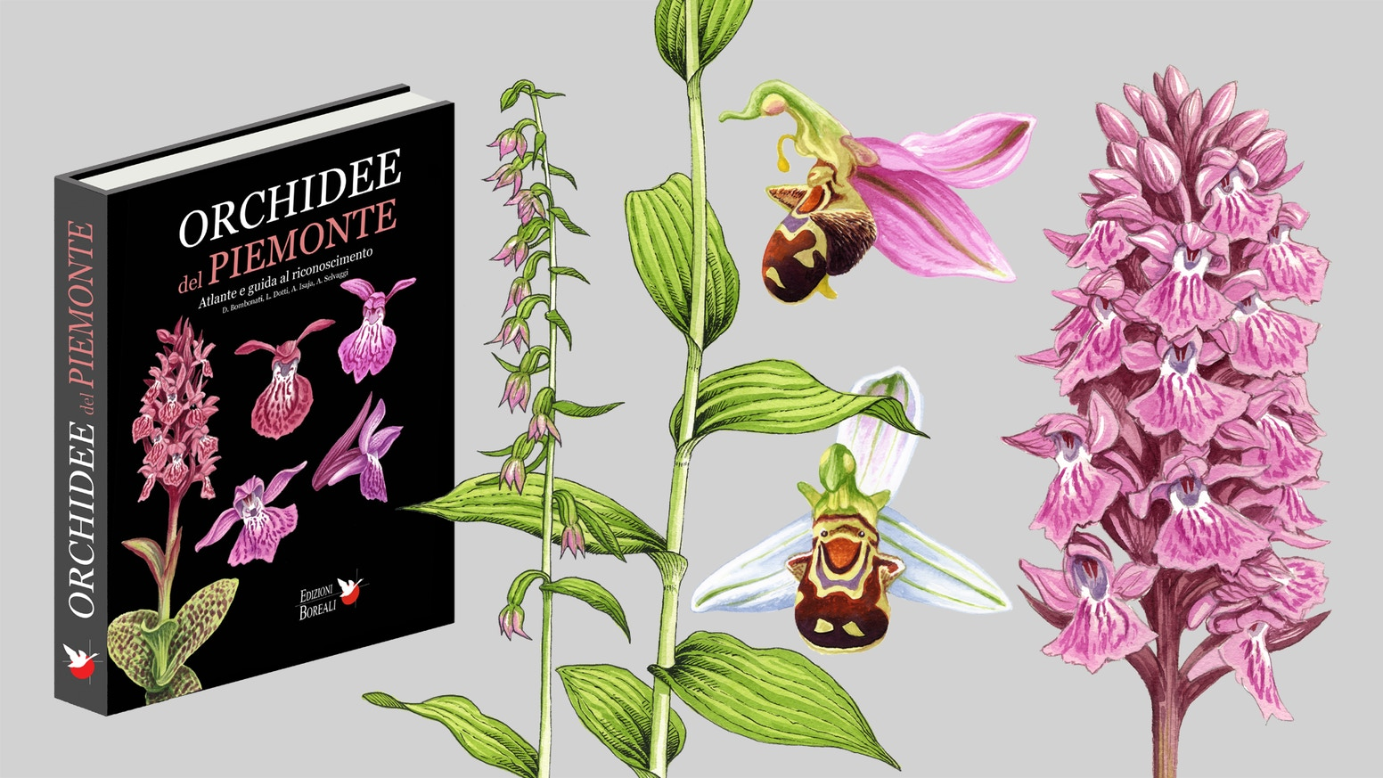 Orchidee del piemonte atlante e guida by boreali for Atlante compass