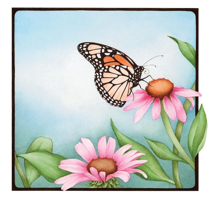 """Monarch on Coneflower"" illustration"