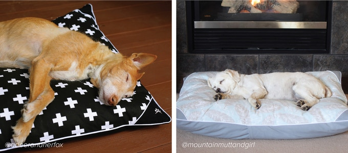 Hybern8 The Dog Bed You Design By Petoji Kickstarter