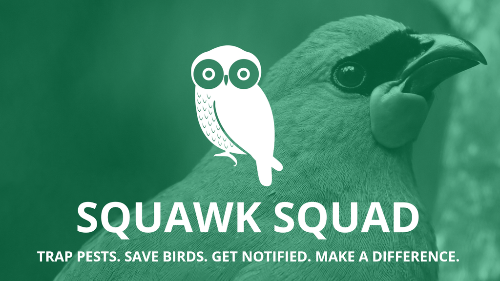 Squawk Squad - Saving New Zealand's Native Birds project video thumbnail