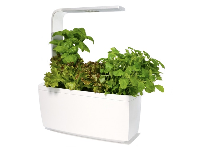 T6 with herbs and lettuce.