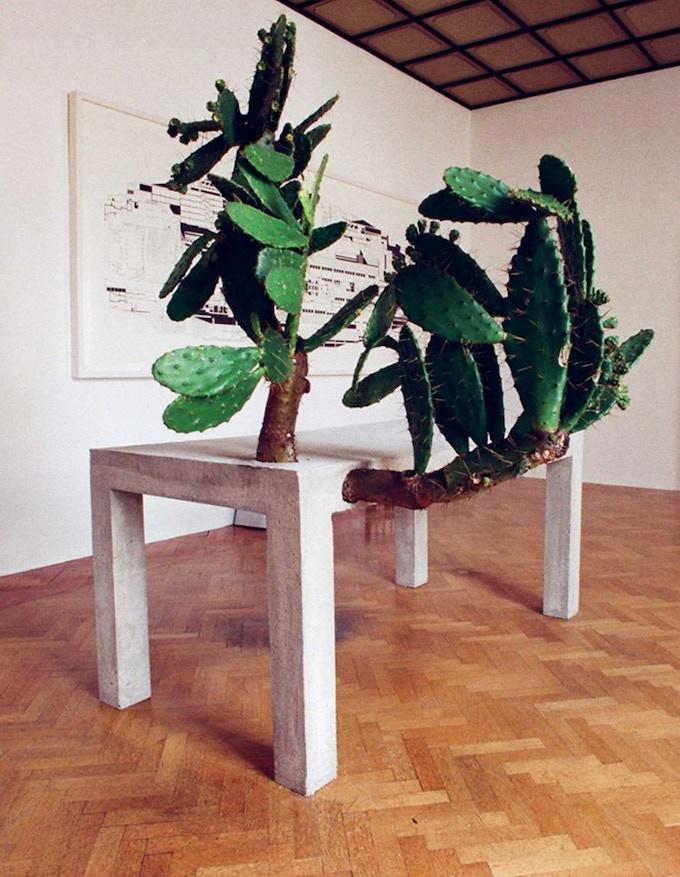 Concrete Table with Opuntia, Alterazioni Video,  2008