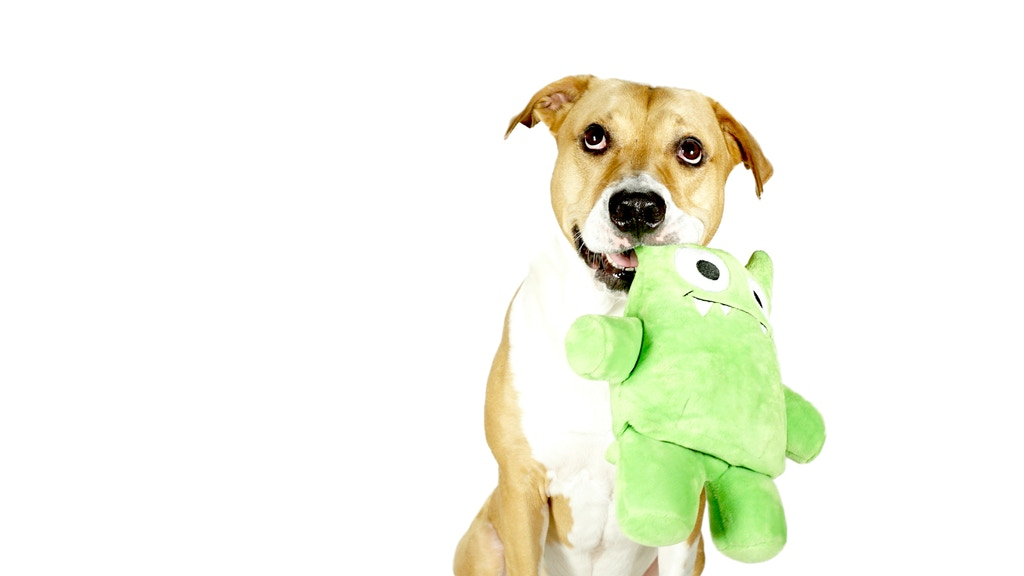 Tearribles: The Dog Toy We've All Been Waiting For project video thumbnail