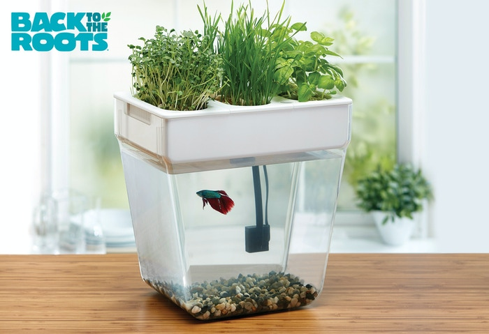 Click LEARN MORE to order your own Water Garden, the easy-to-setup, home aquaponics kit. Grow fresh, organic herbs in this closed-loop 3 gallon fish tank!