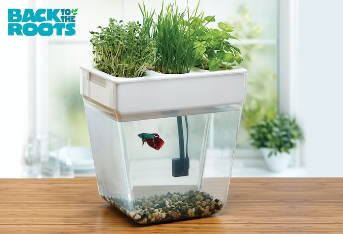 Home aquaponics kit self cleaning fish tank that grows for Fish tank herb garden