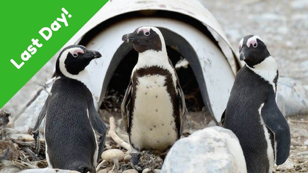 Invest in the Nest: Save Penguins from Extinction project video thumbnail