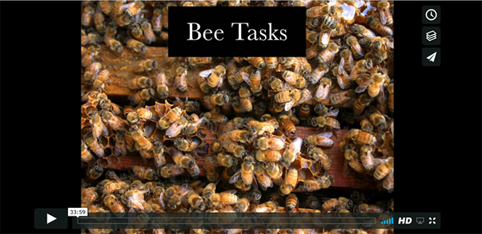 Natural Beekeeping with Jacqueline Freeman