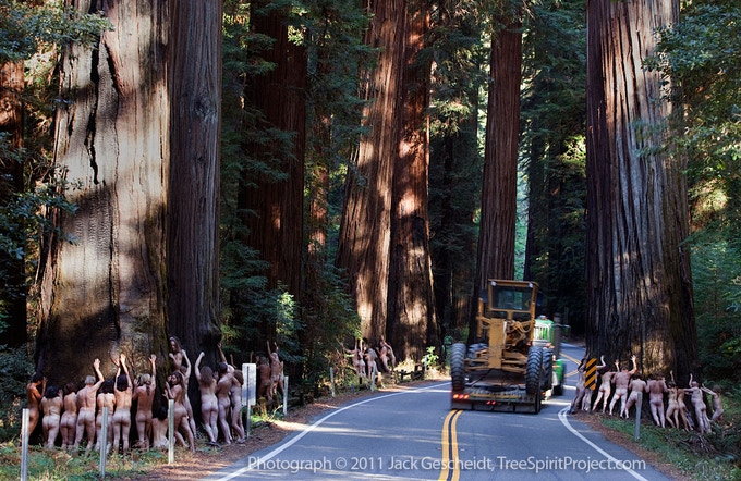 Brave tree lovers put their bodies on the line for 1,000-year-old redwoods.
