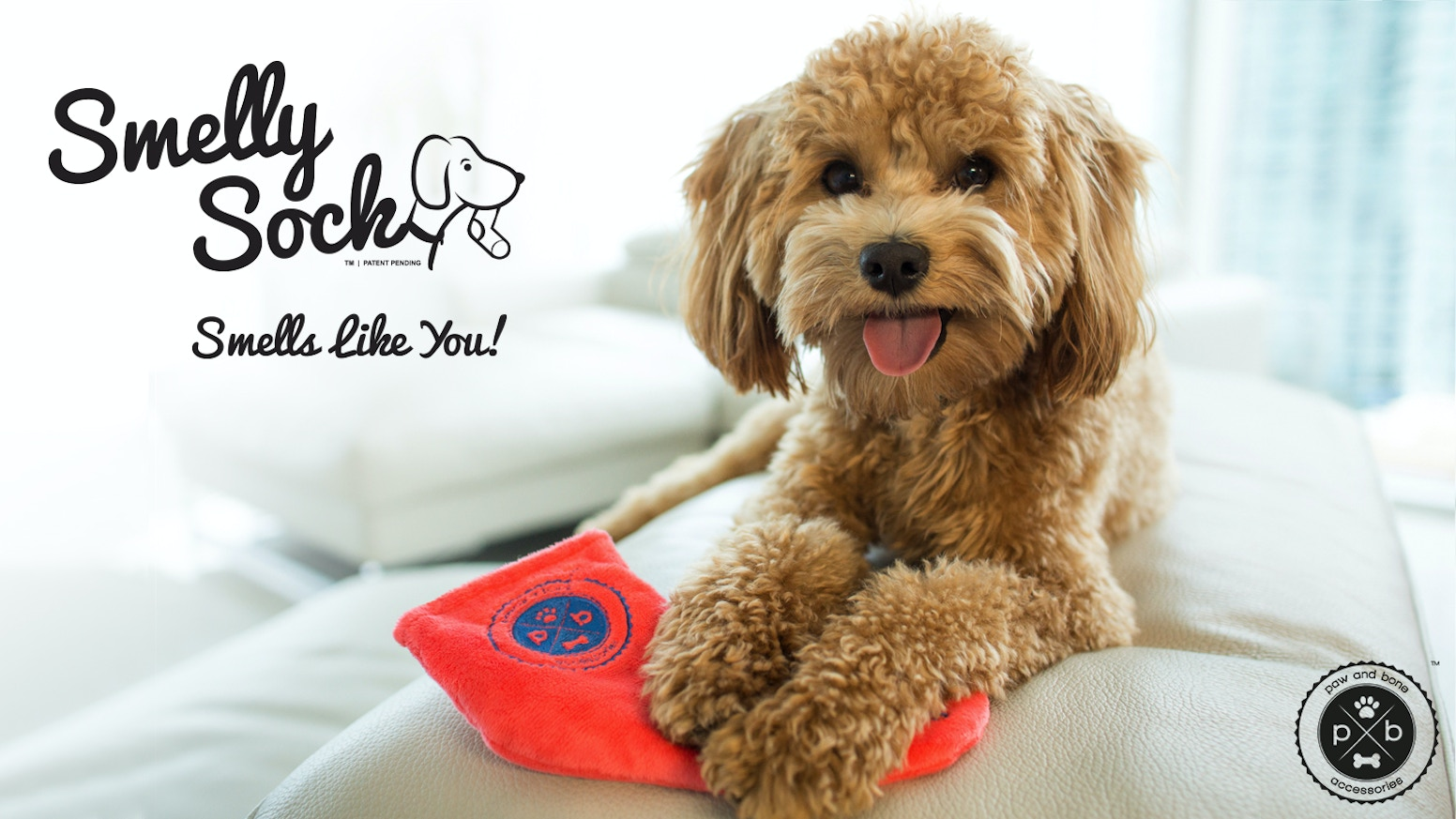 the smelly sock the only dog toy that smells like you by paw and bone kickstarter. Black Bedroom Furniture Sets. Home Design Ideas
