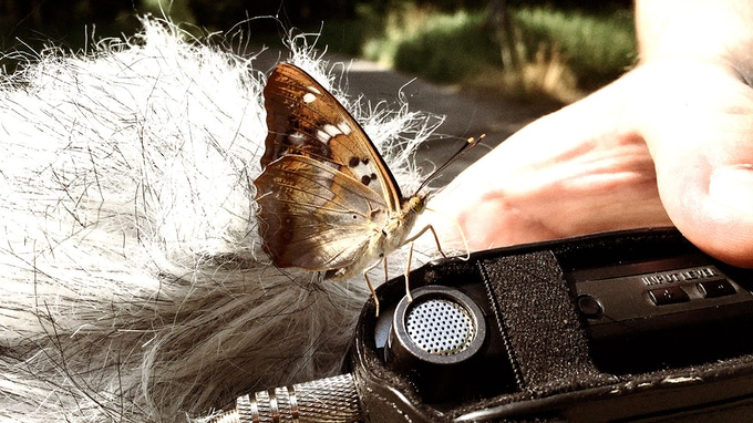 While recording a historic steam train, we also catched a butterfly :)