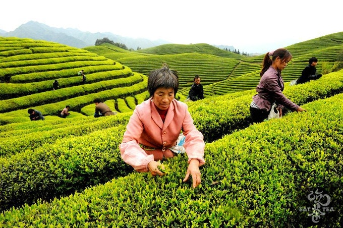 Tea Spot Taste The Real Tea By Eat Tea Kickstarter