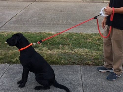 Easily slide the prussic knot to lengthen the rope leash to allow the dog more freedom.