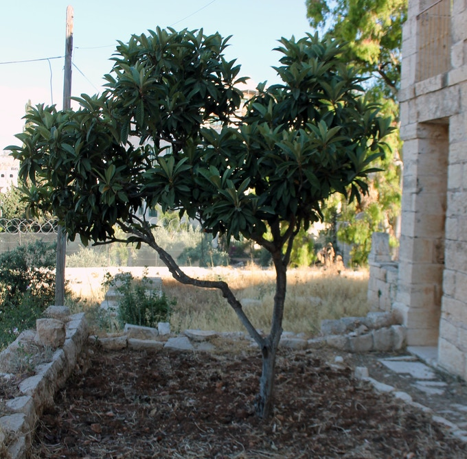 Pledge $500  - A tree named after you in our garden!