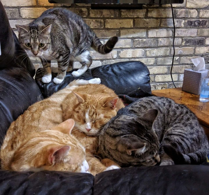Cat Cafe Mad: Home to fosters