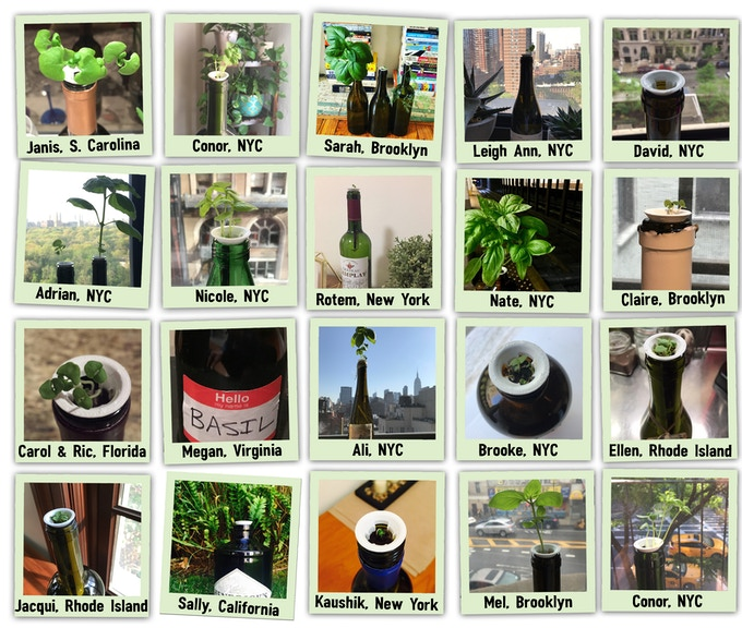 Some of our beta users growing their first basil plants!