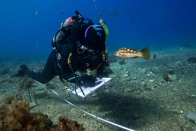 Reef Check divers collect data on fish, invertebrates and seaweed on rocky reefs